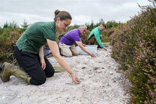 Marwell volunteers releasing rare lizards back into the wild
